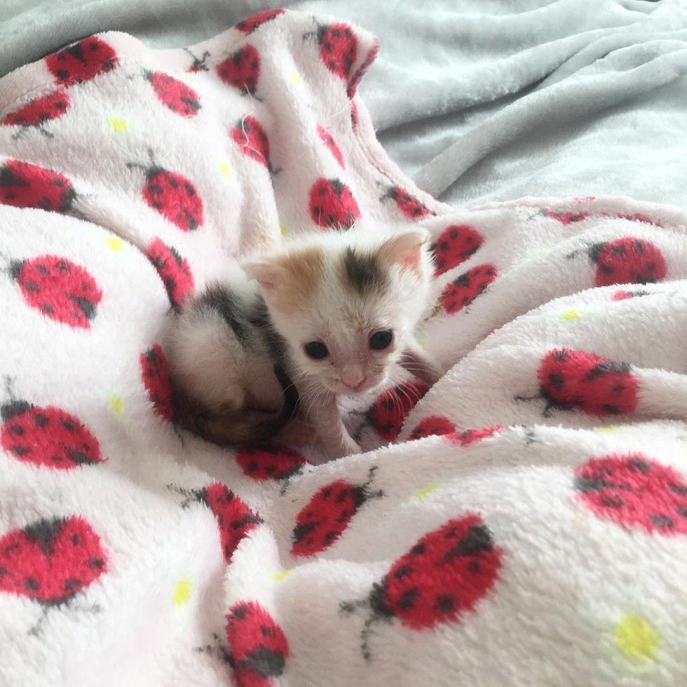 A Tiny One Day Old Orphaned Kitten The Only Survivor From Her Litter Refused To Give Up And Fought Hard To Live Five Weeks Later Kitten Animals Kittens