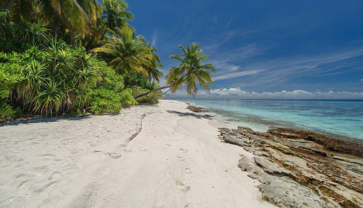 مجموعة صور شواطئ شاطئ Beach عالية الوضوح خلفيات سياحة 240 Summer Travel Palm Trees Beach Palm Trees