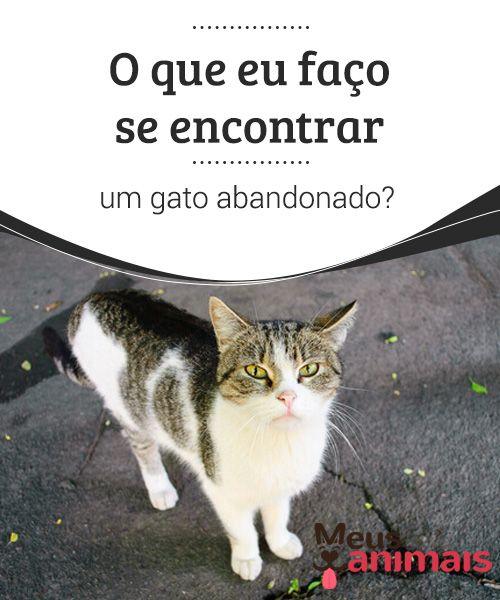 Encontrar um gato abandonado nas ruas, saiba como ajudá-lo Se pela rua você 85dc167dbb