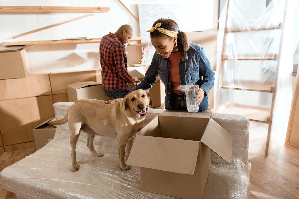 Moving with Pets Top 5 Tips for Success HomeAgain Pet