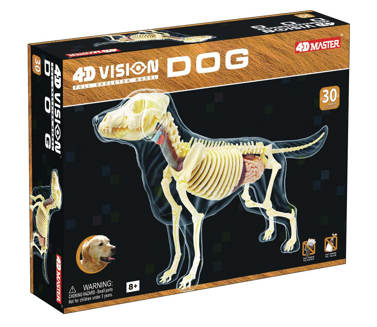 Build your own full skeleton anatomy model of the dog! This ...