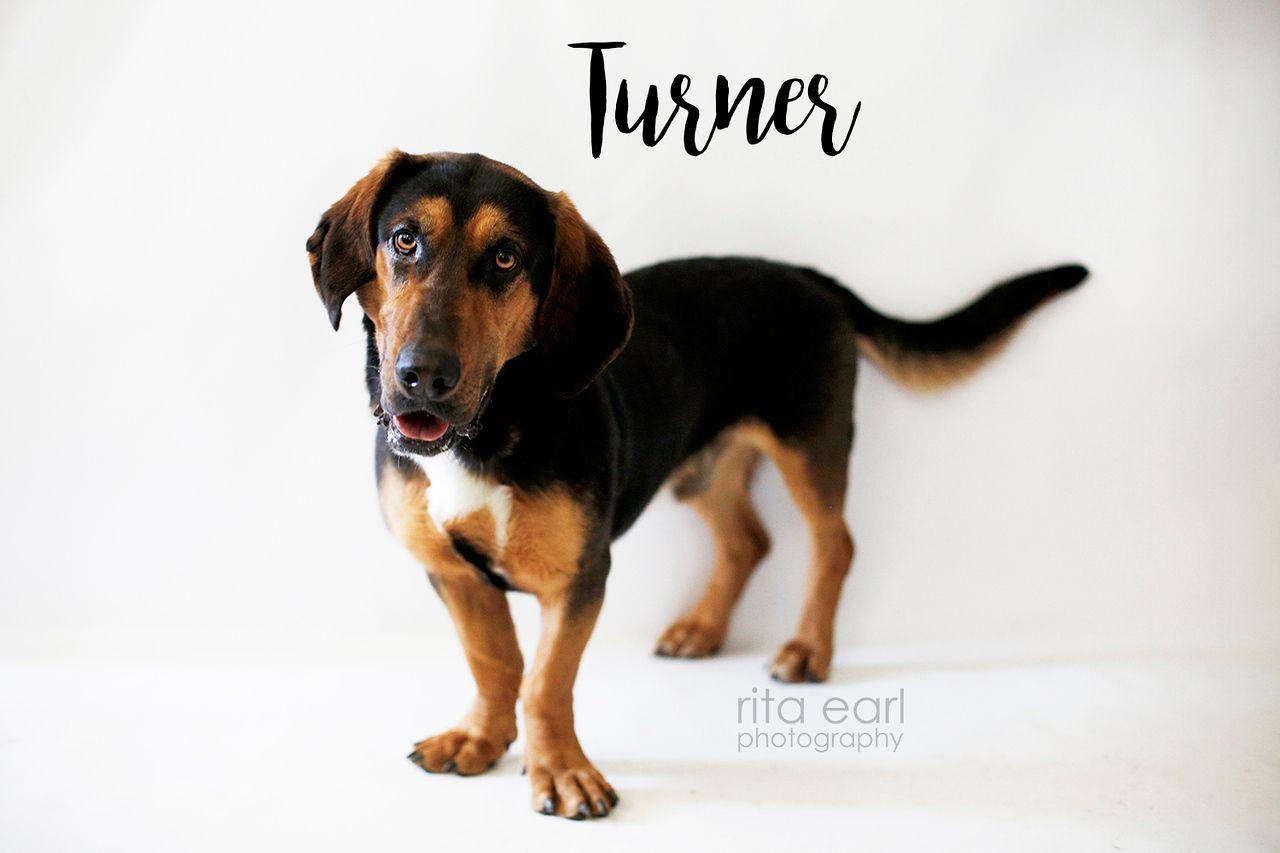 Adopt Turner on German shepherd dogs, Bassett hound, Dogs