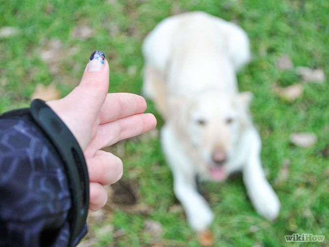 Teach Your Dog To Play Dead On Command Dog Clicker Training