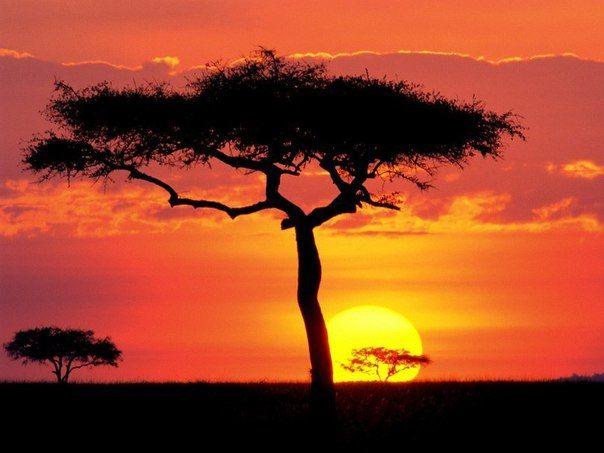 Закат в Африке. Фото | Картинки с закатом, Пейзажи ...