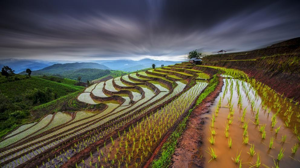 Pin En Cultivos Agrícolas