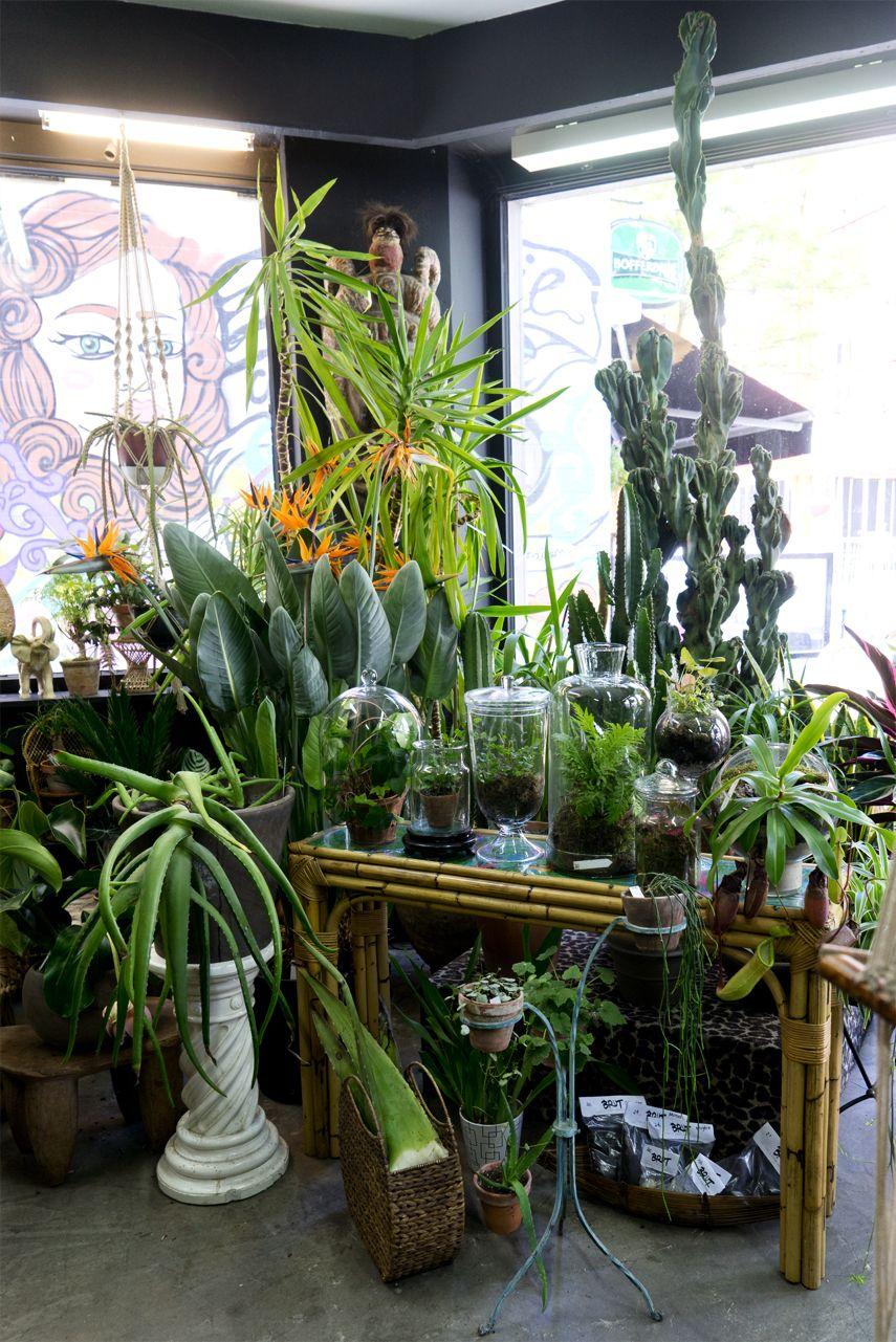 BRUT plant shop in Brussels Plants, Plant hanger, Garden