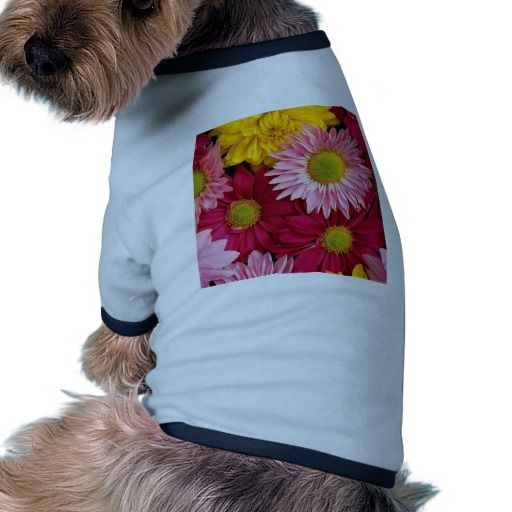 Discount Deals Colorful Nature Gerber Daisies Flower Petals Dog T Shirt so please read the important details before your purchasing anyway here is the best buy