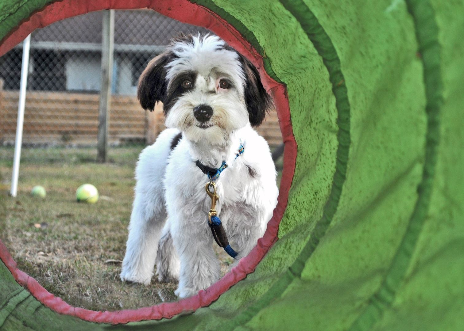 puppy adult dog training classes lessons in Sarasota Dog
