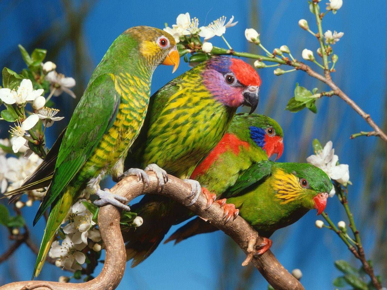 colourful birds wallpaper - beautiful birds wallpaper | birds of a