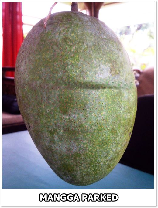 Nama Ilmiah Mangga : ilmiah, mangga, VARIETAS, MANGGA, PARKED, Parks,, Tanaman