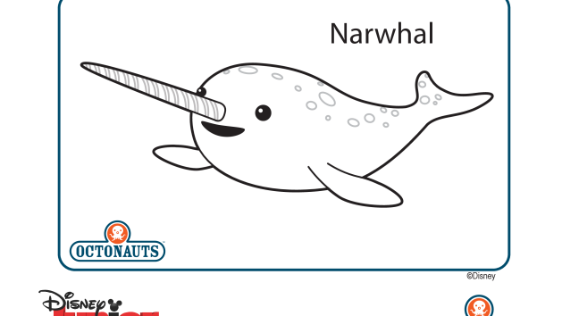 Cute little narwhal | This | Pinterest