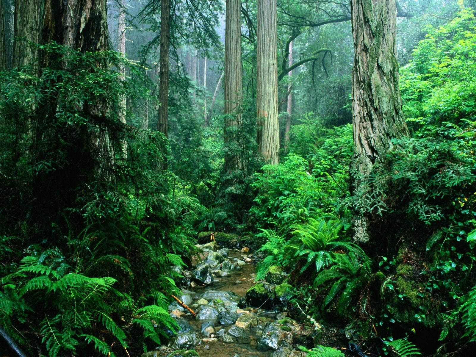 Wallpapers Tropical Rainforest Black And White