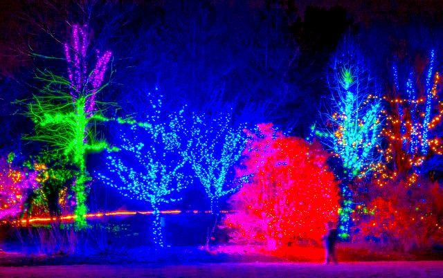 24c7adfe09121dd852d37f871cf96701 - Botanical Gardens Boylston Ma Christmas Lights