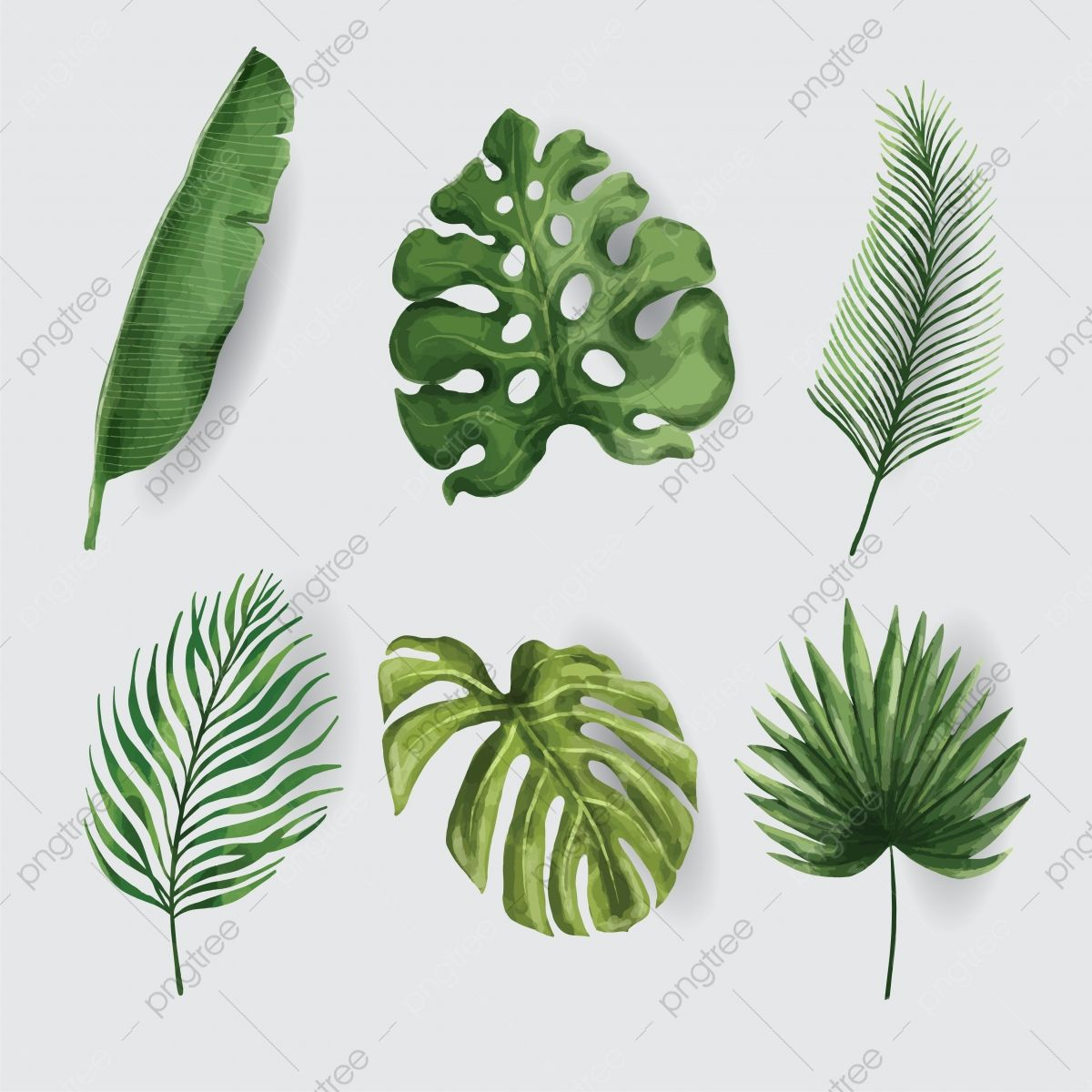 Tropical Leaf Watercolor Set Vector Leaf Clipart Eaf Colourful Png And Vector With Transparent Background For Free Download Tropical Leaves Leaf Clipart Botanical Decor