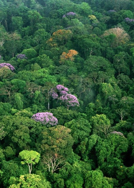 Tropical forest canopy (Photo by Christian Ziegler) & Tropical forest canopy (Photo by Christian Ziegler) | Awesome ...