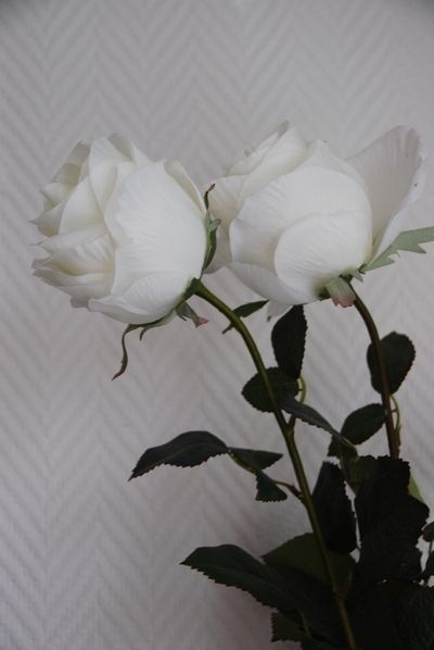 Pin by Monica Kaku on flower (With images) | White roses ...