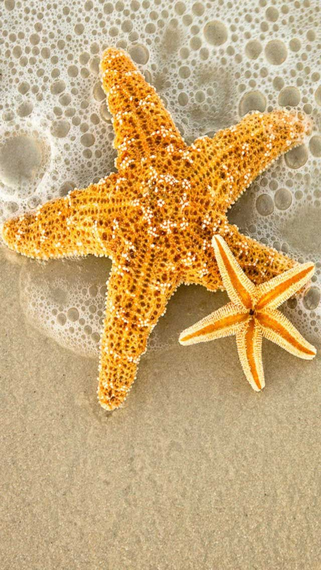 Ocean Beach Starfish IPhone Wallpaper