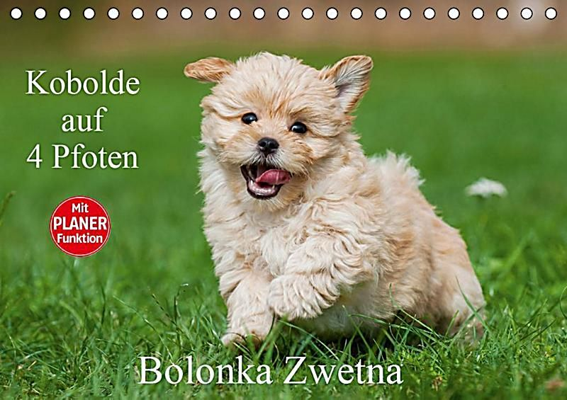 Pin Von Chantal Veerhuis Auf Tiere In 2020 Bolonka Zwetna Bolonka Kleine Hunde