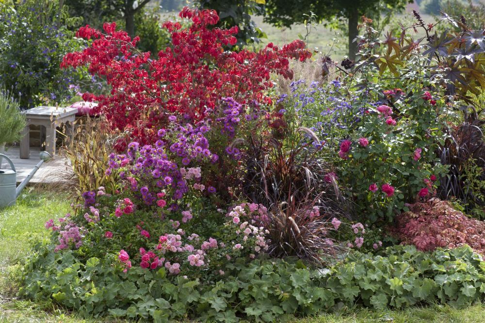 Rosen Mit Langer Blutezeit Garten Garten Bluten Und Flugel