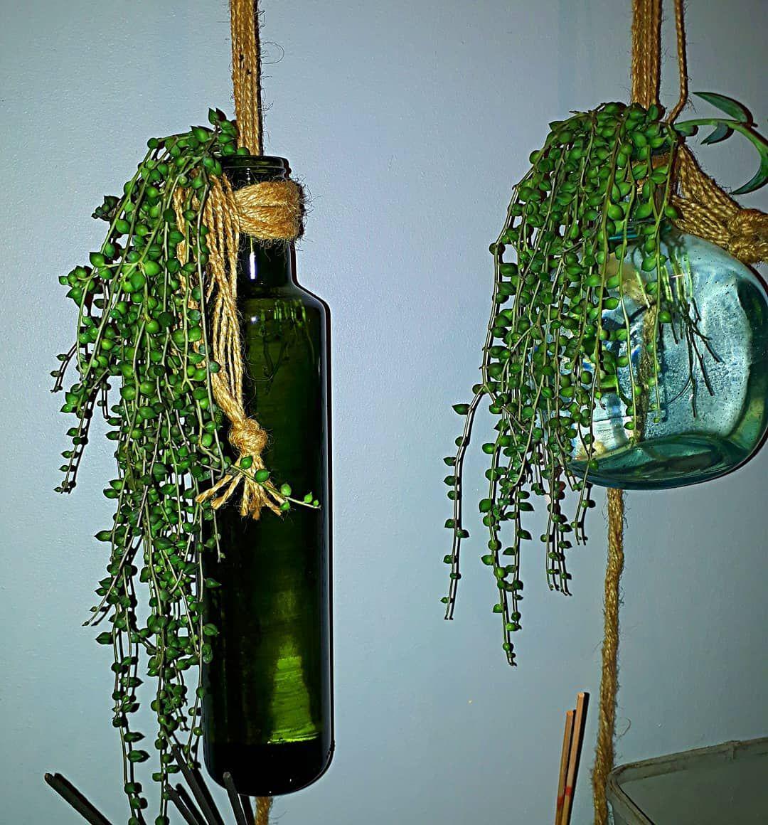 #suculentas #suculenta #plantsmakepeoplehappy #cactosesuculentas #succulents #succulentlover #succulentlove #cactilove...