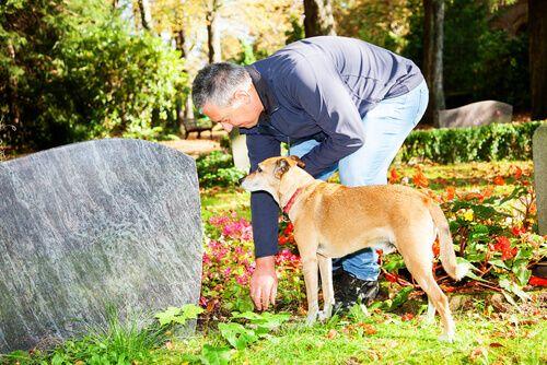 L'amore degli animali è incondizionato. Ecco la storia di un cane che è rimasto sulla tomba del suo padrone..