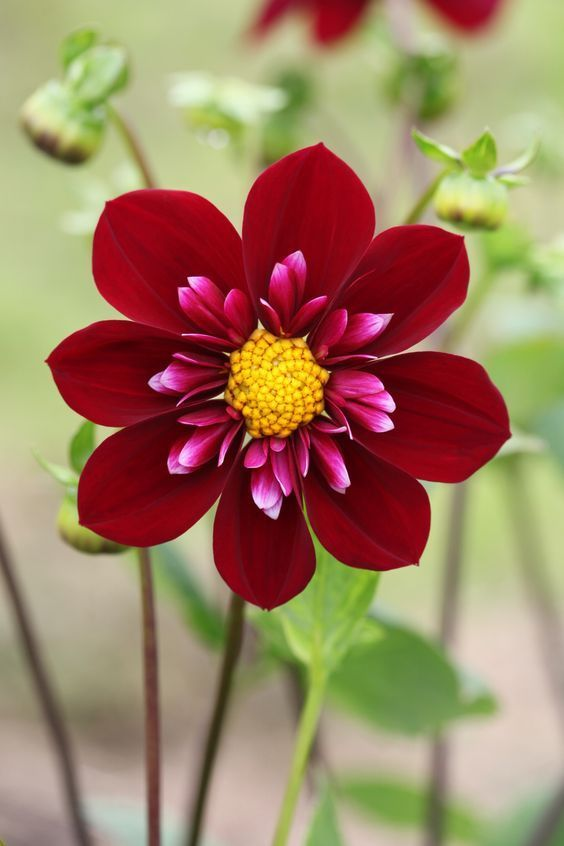 Ehrfürchtig Ungewöhnliche Blumen - #blumen #Ehrfürchtig #Ungewöhnliche #bonsaiplants