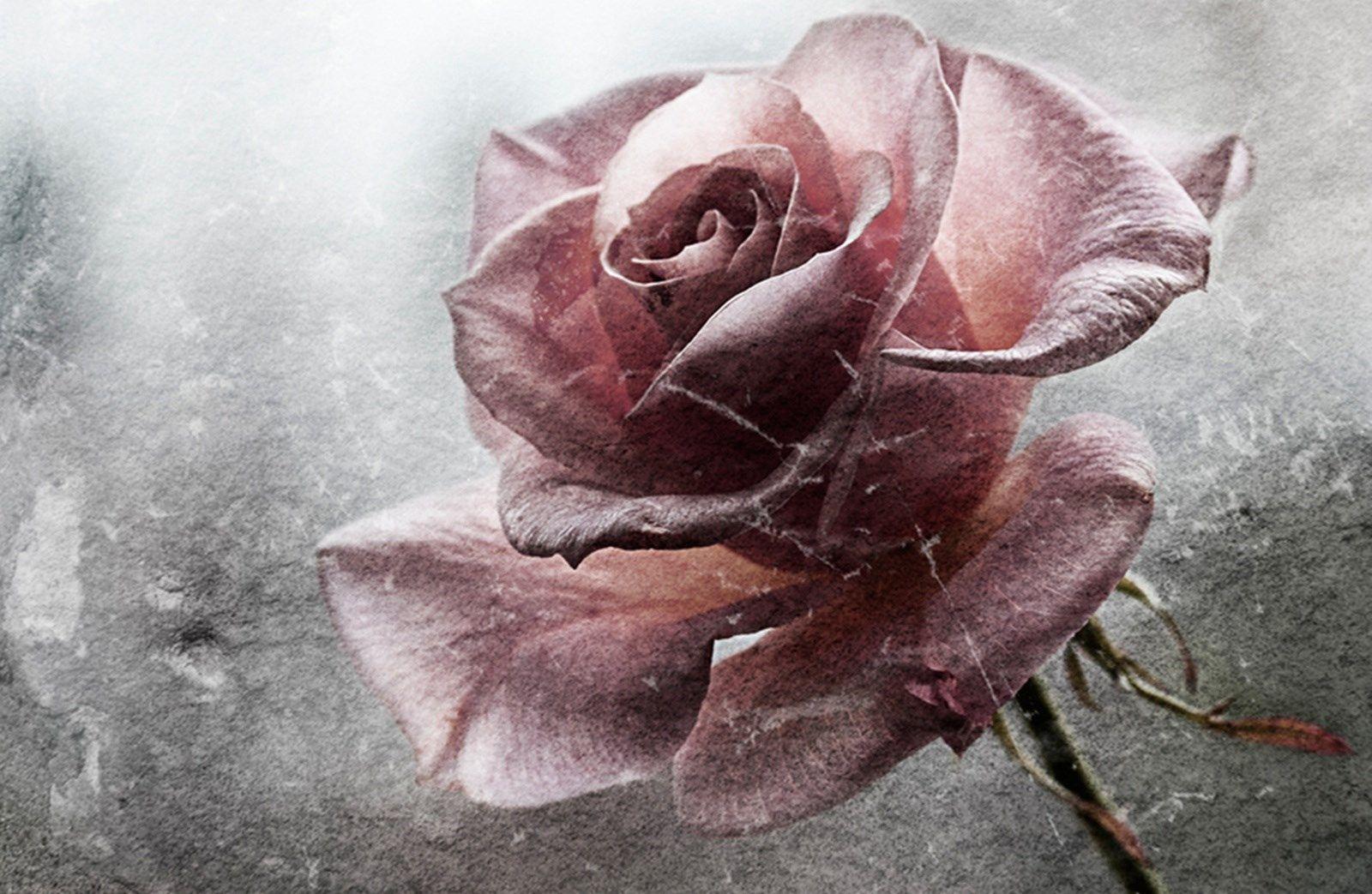 Xpx flower wallpaper for desktop background by branch mason