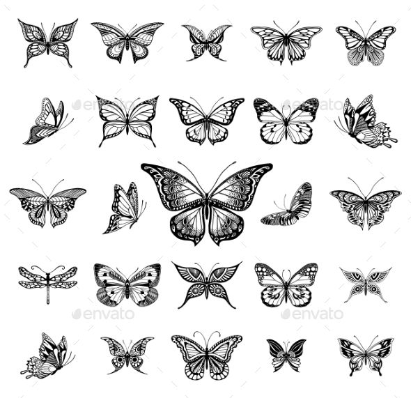 Photo of Butterflies Graphic Illustration – Tattoos Vectors