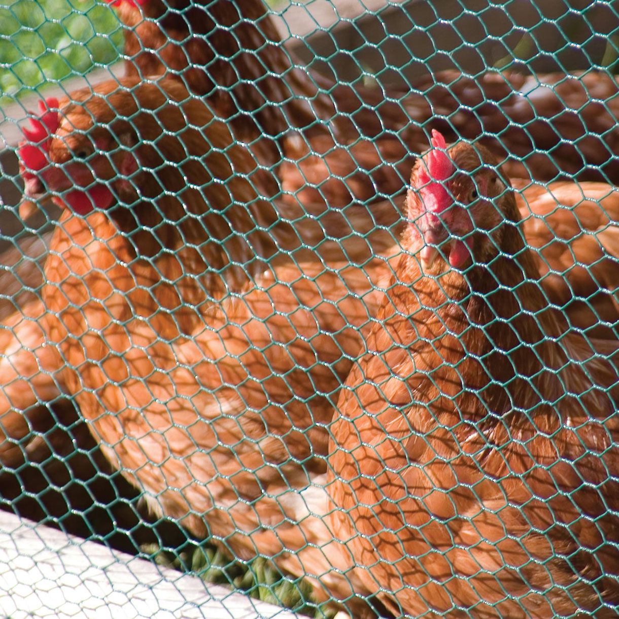 Hexagonal Wire Mesh Netting/Chicken Mesh: Applications 1. Used in ...
