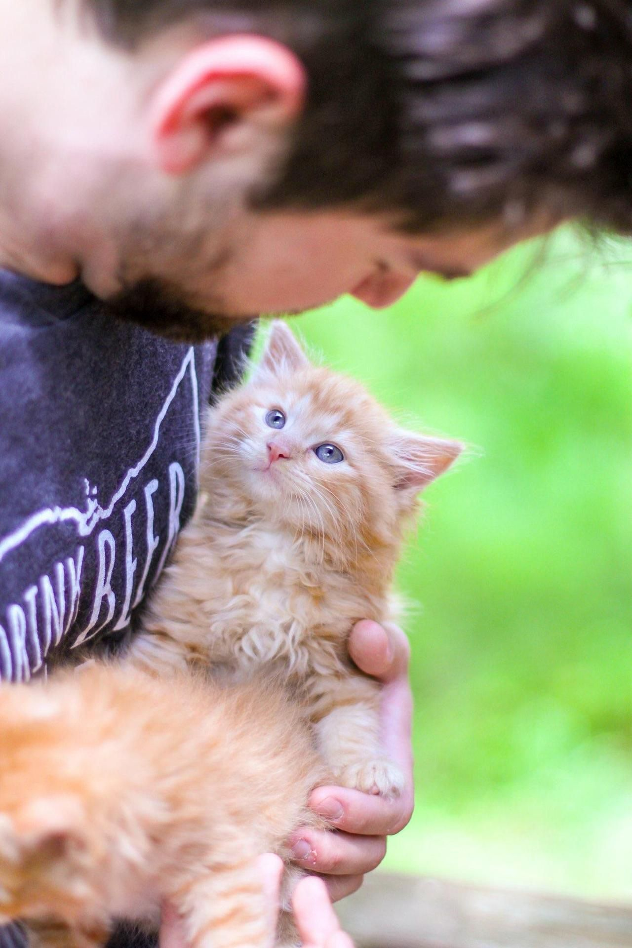 Thought I Could Foster Now I Have Four Cats By Ewokdisnerd What You Think About Pets Kindness To Animals Cute Cats And Kittens