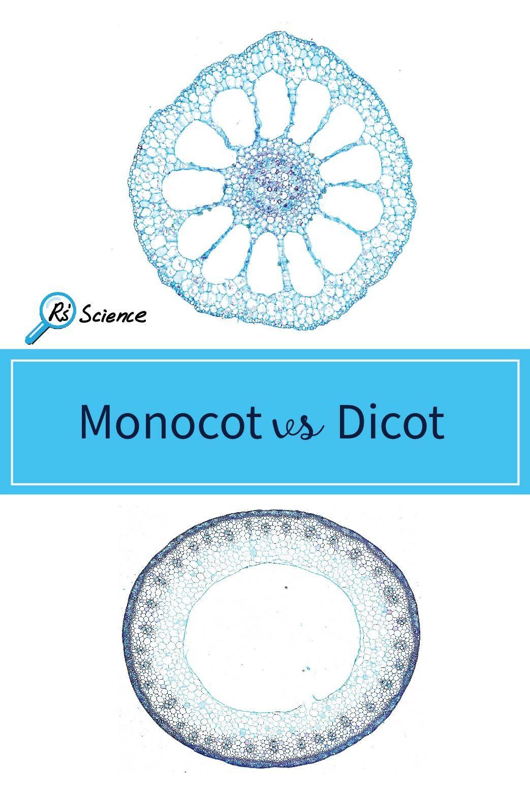 Monocot Vs Dicot Plants In