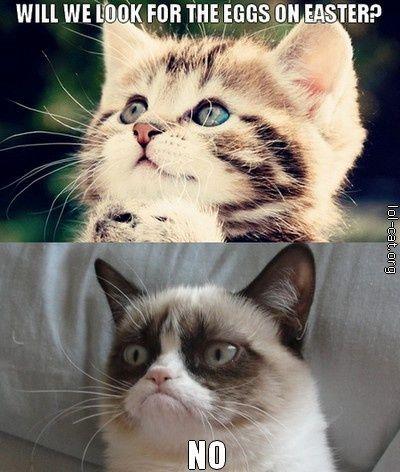 Grumpy Cat Grumpy Cat Grumpy Cat Meme Crazy Cats