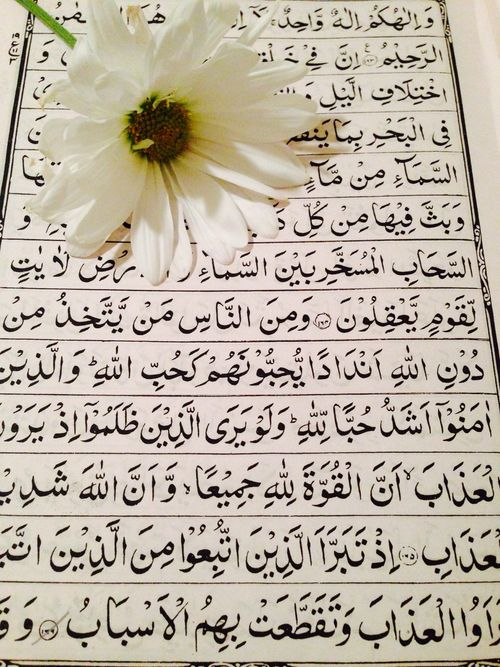 Desertrose و ل ق د ي س ر ن ا ال ق ر آ ن ل لذ ك ر ف ه ل م ن م د ك ر And We Have Certainly Made The Quran Easy For Remembra Islam Quran Quran Karim