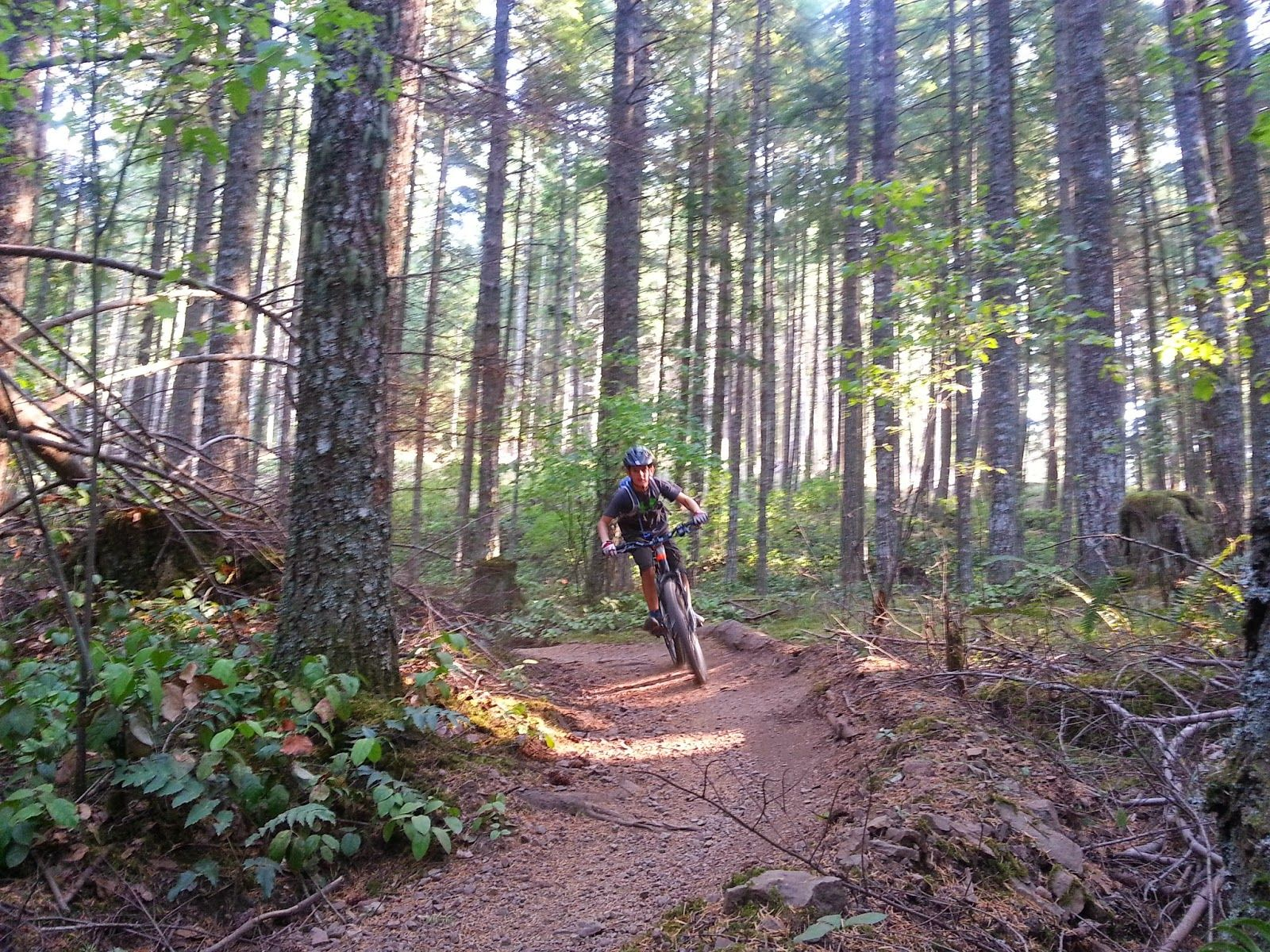 On The Beaten Path Tried And Tested Top 5 Vancouver Island Mtn