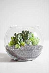 terrarium!