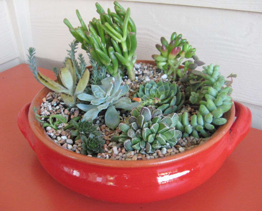 Lovely Succulents Awesome Ideas