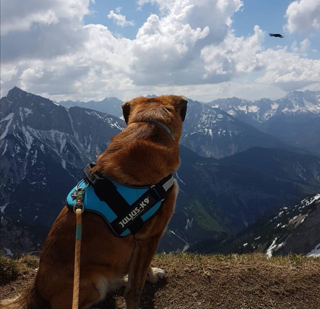 Tessa Im Karwendelgebirge Danke An Ela Fur Das Bild