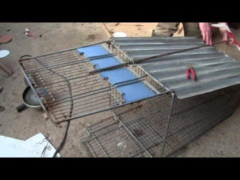 How To Make A Fox Trap From A Shopping Trolley And First Live Catch Energia Alternativa Energia Sustentable Energia