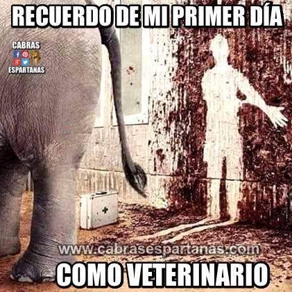 Veterinario Recuerdo Mi Primer Dia Chistes Graciosos De Animales Memes Divertidos Chistes Divertidos