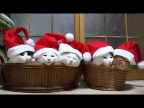 liebe gr e zu weihnachten senden youtube christmas. Black Bedroom Furniture Sets. Home Design Ideas