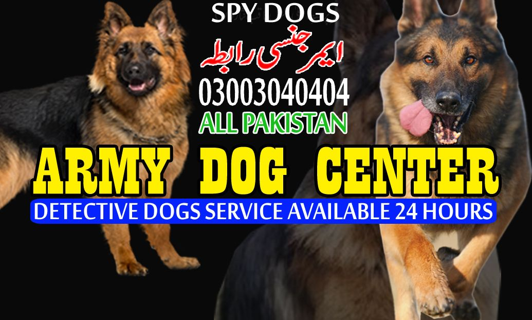 Army Dog Center Multan In 2020 Army Dogs Dogs Army