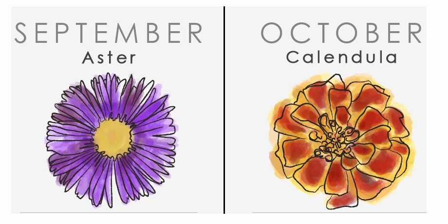 What Your Birthday Flower Says About You Birth Flowers Birth Month Flowers Flowers