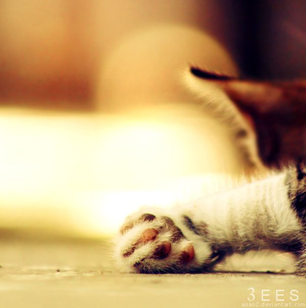 Mini paw ... by aoao2.deviantart.com on @deviantART