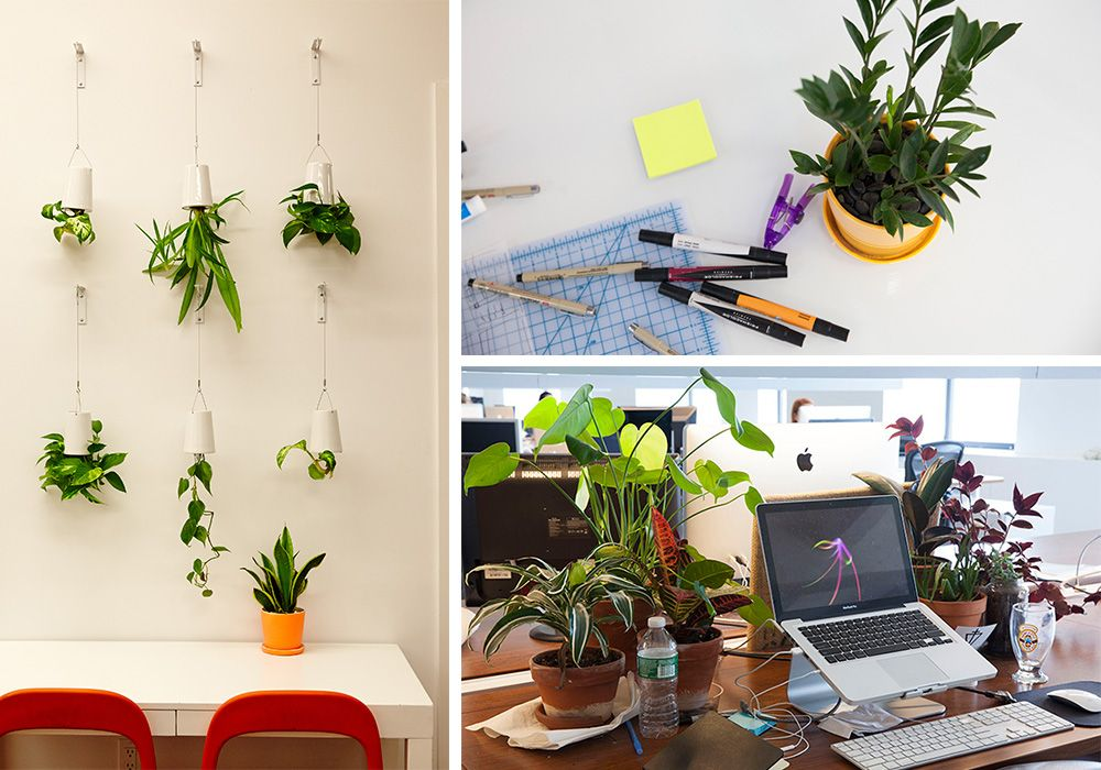 office cubicle plants. Plants For Office Cubicle. House Cubicle N