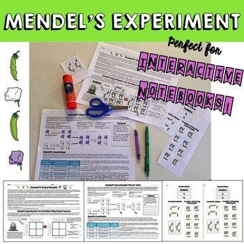 Genetics Mendel S Experiments Teaching Science Teaching