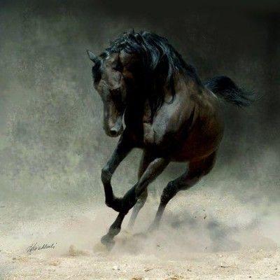 Stunning Black Horse