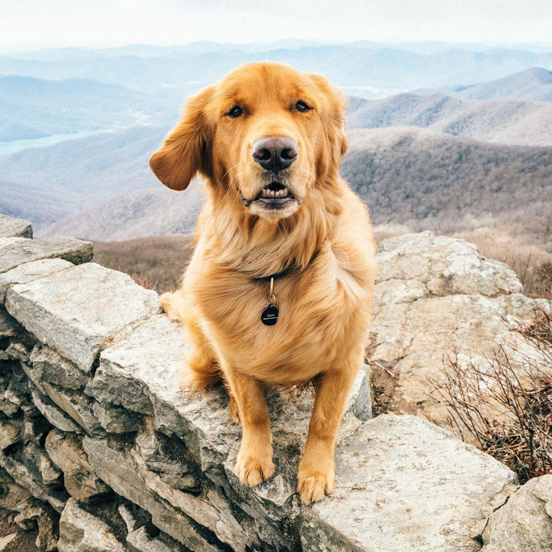 Aspen The Mountain Pup On Instagram This Wind Is Making My Fur