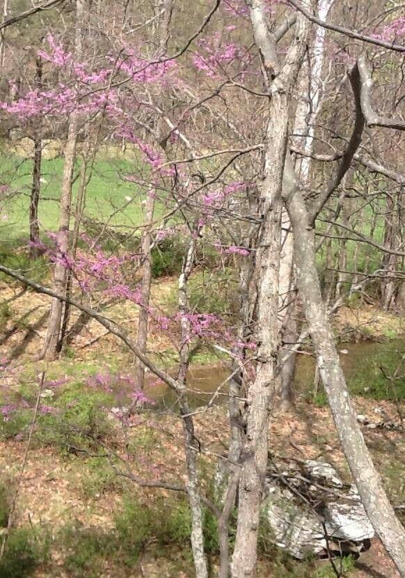 Bloomery Run in spring.