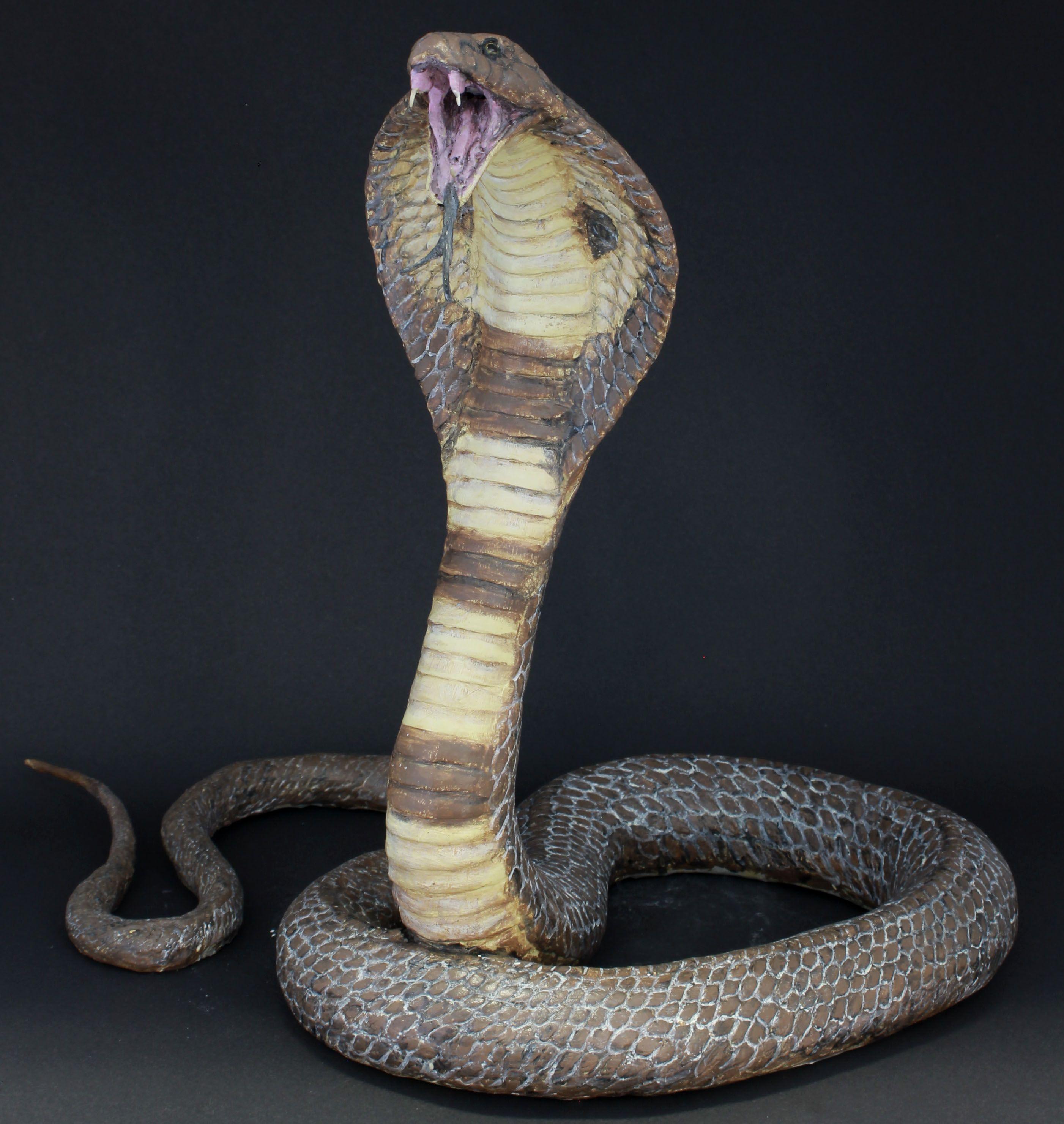 Life size-ish sculpture of \'Spectacled Cobra\' (naja naja) Created ...