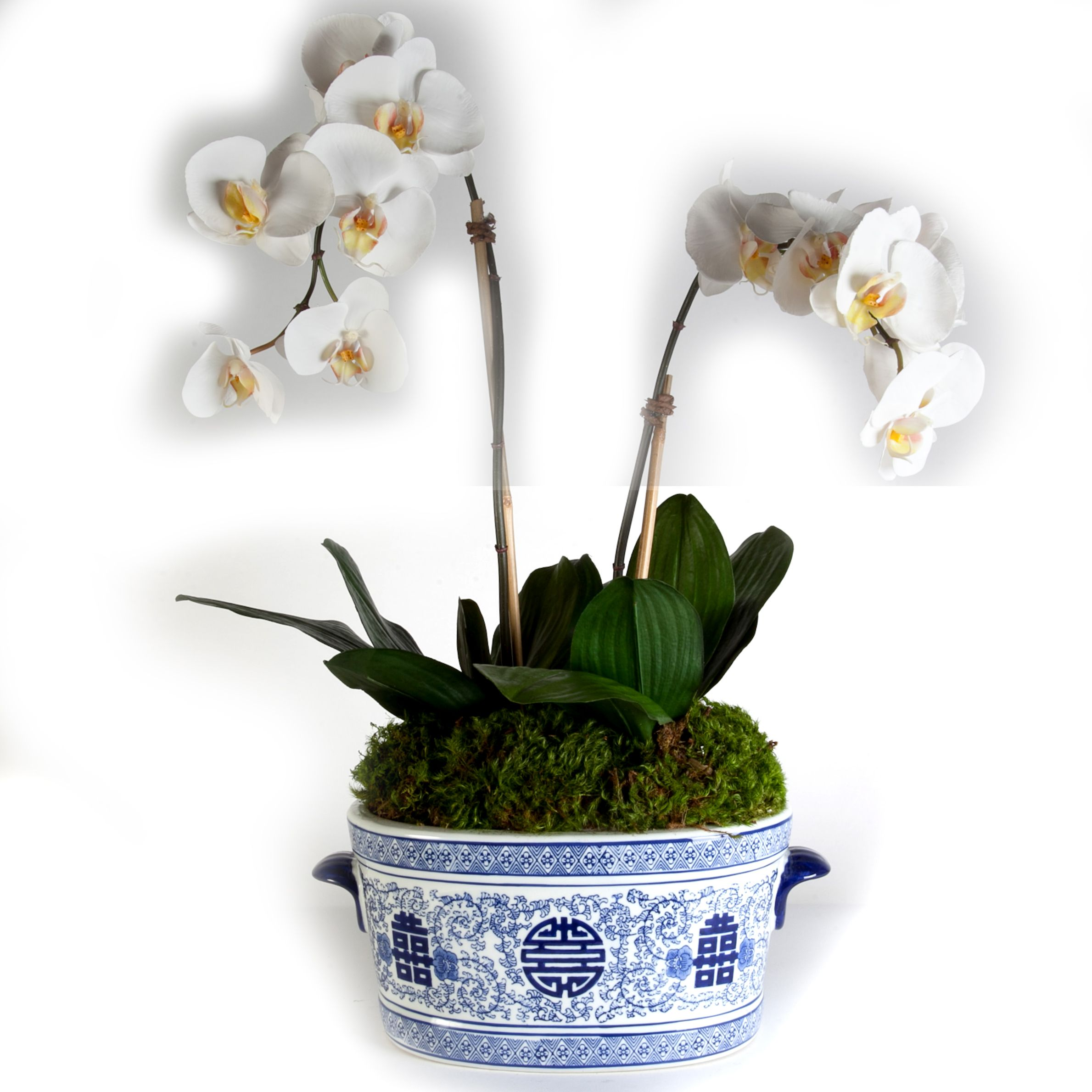 2488 Orchids in Blue & White Oval 18x26